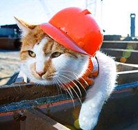 Ответственность застройщика по договору долевого строительства